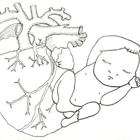 Baby Series The Heart