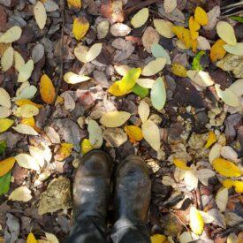 autumn beauties 2020